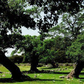 Los Llanos de Libar